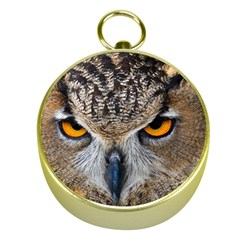 Great Horned Owl 1 Gold Compasses
