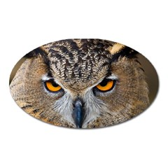 Great Horned Owl 1 Oval Magnet