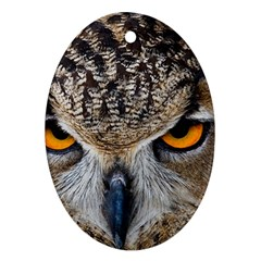 Great Horned Owl 1 Oval Ornament (Two Sides)