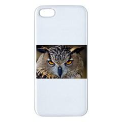 Great Horned Owl 1 Apple iPhone 5 Premium Hardshell Case