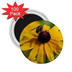 Black eyed Susan 2.25  Magnets (100 pack)