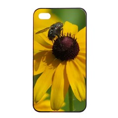 Black eyed Susan Apple iPhone 4/4s Seamless Case (Black)