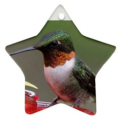 Ruby Throated Humming Bird  Star Ornament