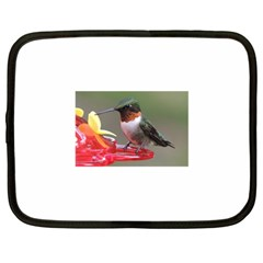Male Ruby Throated Humming Bird Netbook Case (Large)