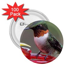 SKU Male Ruby Throated Hummingbird 2.25  Buttons (100 pack)