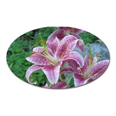 Pink Tiger Lilies Oval Magnet