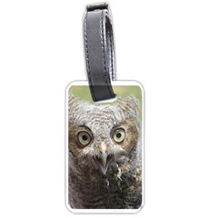 baby screech owl Luggage Tags (One Side)