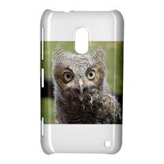 baby screech owl Nokia Lumia 620