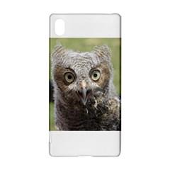 baby screech owl Sony Xperia Z3+