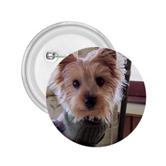 Tea Cup Yorkie 2.25  Buttons