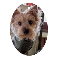 Tea Cup Yorkie Ornament (Oval)