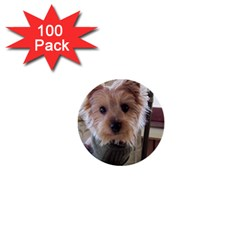 Tea Cup Yorkie 1  Mini Buttons (100 pack)