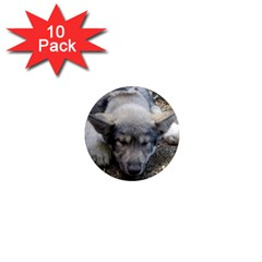 Wolf pup 1  Mini Magnet (10 pack)
