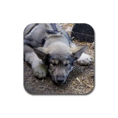 Wolf pup Rubber Square Coaster (4 pack)