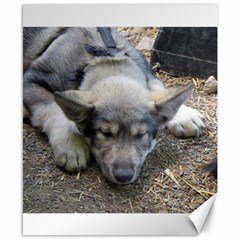 Wolf pup Canvas 8  x 10