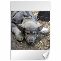 Wolf pup Canvas 24  x 36