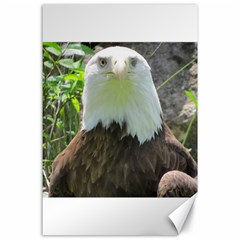 American Eagle Canvas 24  x 36