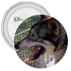 9 Month old wolf  3  Buttons
