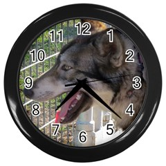 9 Month old wolf  Wall Clocks (Black)