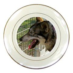 9 Month old wolf  Porcelain Plates