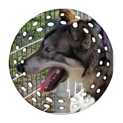 9 Month old wolf  Ornament (Round Filigree)