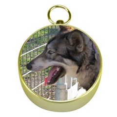 9 Month old wolf  Gold Compasses