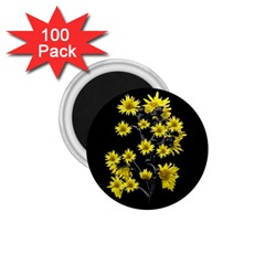 Sunflowers Over Black 1.75  Magnets (100 pack)