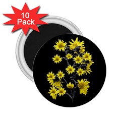 Sunflowers Over Black 2.25  Magnets (10 pack)