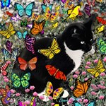 Freckles In Butterflies I, Black White Tux Cat Storage Stool 12   Right