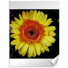 Yellow Flower Close up Canvas 36  x 48