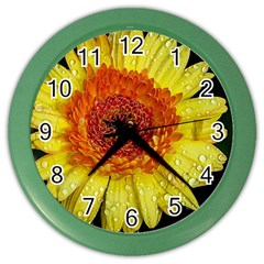 Yellow Flower Close Up Color Wall Clocks