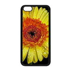 Yellow Flower Close up Apple iPhone 5C Seamless Case (Black)