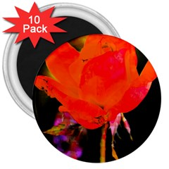 Red Beauty 3  Magnets (10 pack)