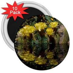 Cactus Flowers with Reflection Pool 3  Magnets (10 pack)