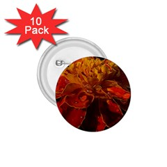 Marigold on Black 1.75  Buttons (10 pack)