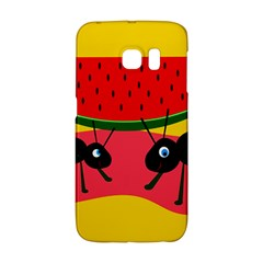 Ants and watermelon  Galaxy S6 Edge