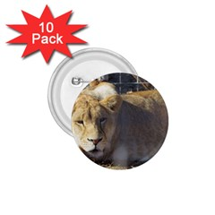 FeMale Lion 1.75  Buttons (10 pack)