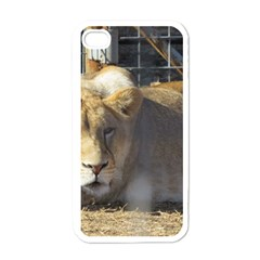 FeMale Lion Apple iPhone 4 Case (White)