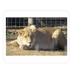 FeMale Lion Double Sided Flano Blanket (Large)