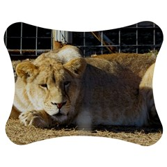 FeMale Lion Jigsaw Puzzle Photo Stand (Bow)
