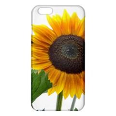 Sunflower Overload Iphone 6 Plus/6s Plus Tpu Case