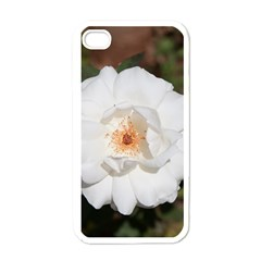 White Petal Apple iPhone 4 Case (White)