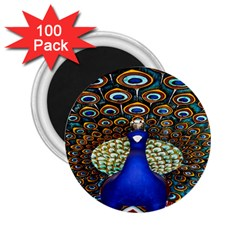 The Peacock Pattern 2.25  Magnets (100 pack)