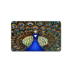 The Peacock Pattern Magnet (Name Card)
