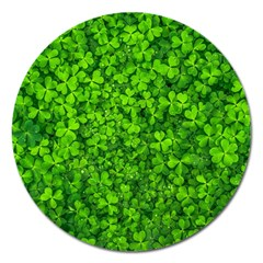 Shamrock Clovers Green Irish St  Patrick Ireland Good Luck Symbol 8000 Sv Magnet 5  (round)
