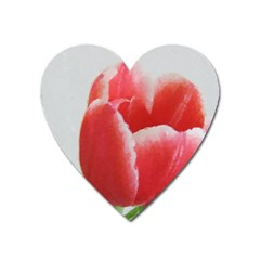 Red Tulip Watercolor Painting Heart Magnet
