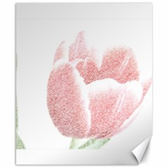Red Tulip pencil drawing Canvas 8  x 10