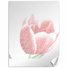 Red Tulip pencil drawing Canvas 12  x 16