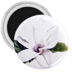 White Magnolia pencil drawing art 3  Magnets