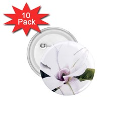 White Magnolia pencil drawing art 1.75  Buttons (10 pack)